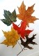 03 Autumn Leaves 2 by Margaret Crouch