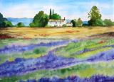 51 - Mary Vivian 'Lavender in Provence' Watercolour.JPG