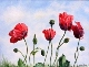 72 - Mary Vivian - Flowers of Remembrance - Watercolour.JPG