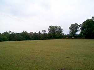 The field in July looking towards the Church